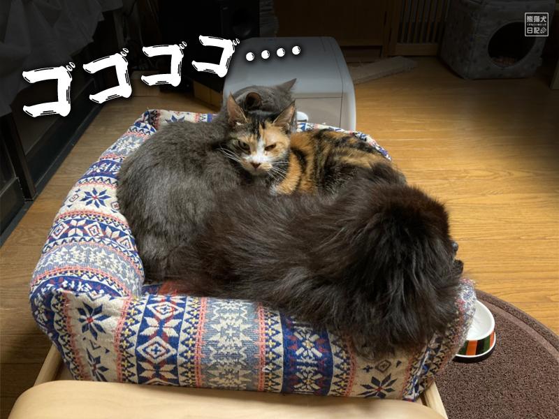三毛猫の稚葉