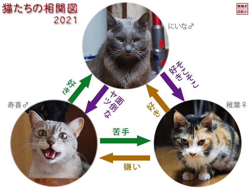 猫たちの相関図