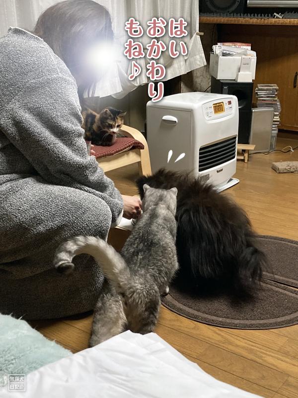 寿喜&ポメラニアン真熊