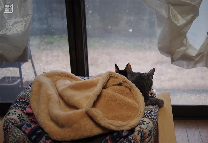 石像猫にいな&三毛猫の稚葉