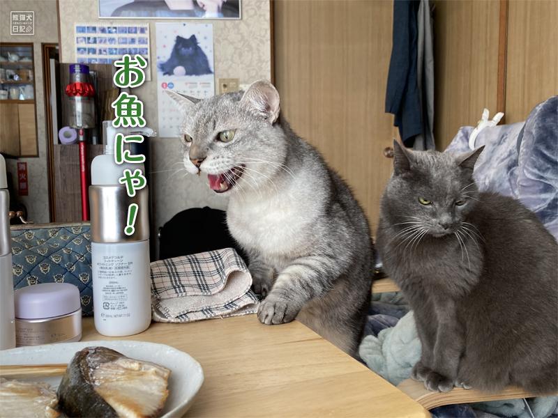寿喜&石像猫にいな