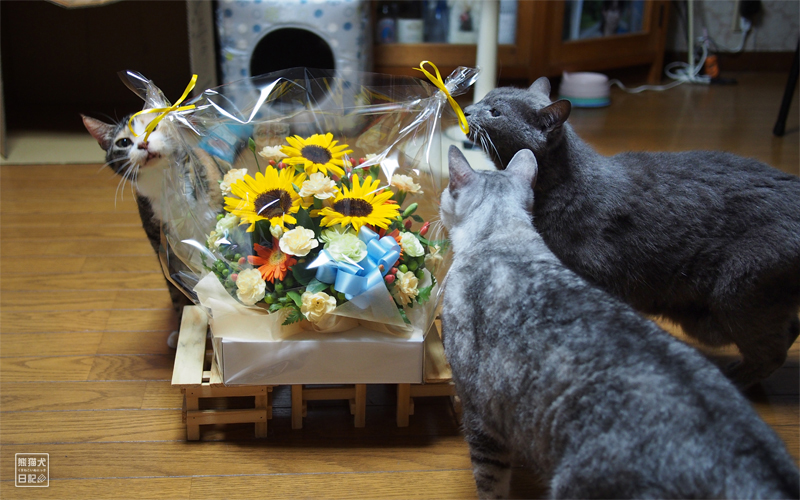 石像猫にいな&寿喜&三毛猫の稚葉