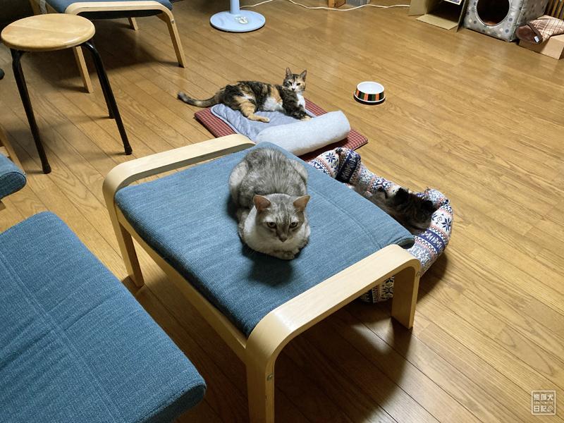 開腹手術後の抜糸