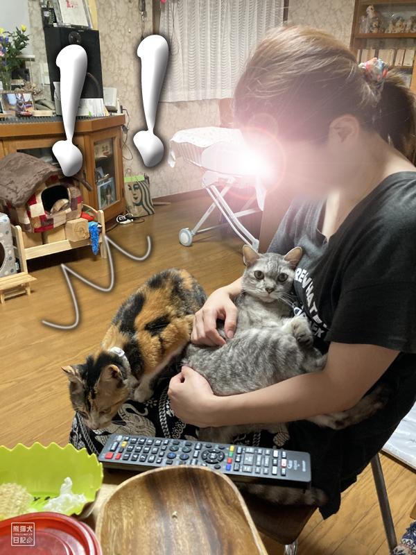 甘え猫の対決