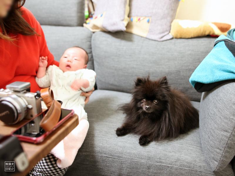 赤ん坊とポメラニアン真熊