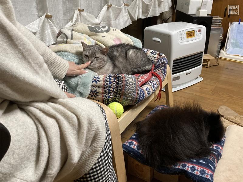 先住猫の死の悲しみ