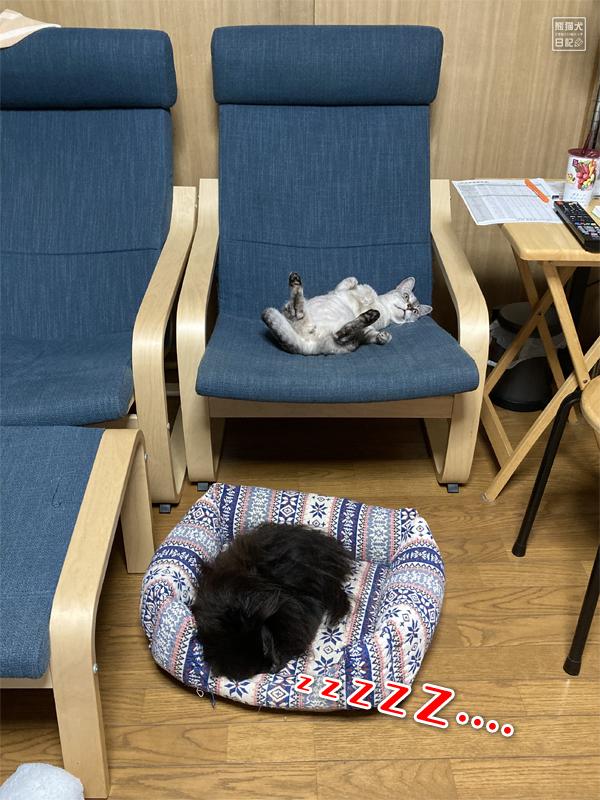 猫の肥満細胞腫と転移