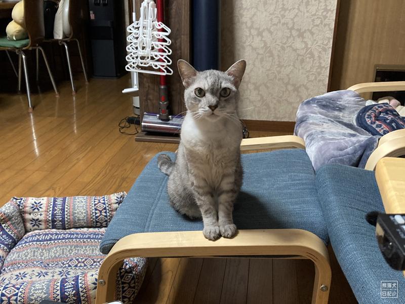 猫の肥満細胞腫の治療