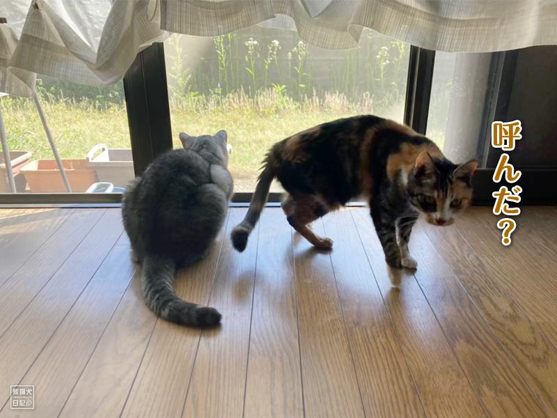 留守番中の猫たち