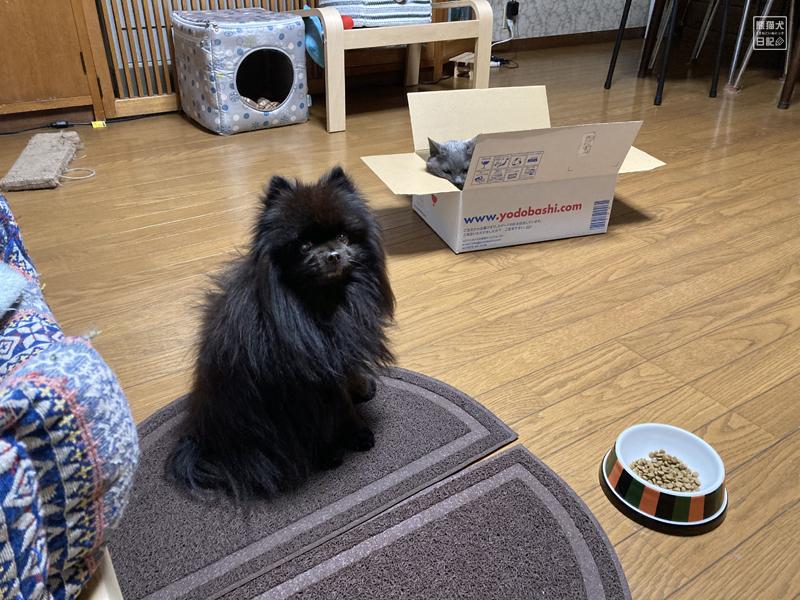 猫たちの箱取り合戦