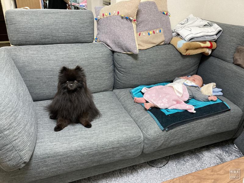 黒ポメラニアンと赤ちゃん
