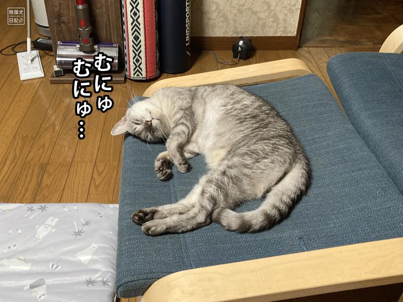 肥満細胞腫の猫