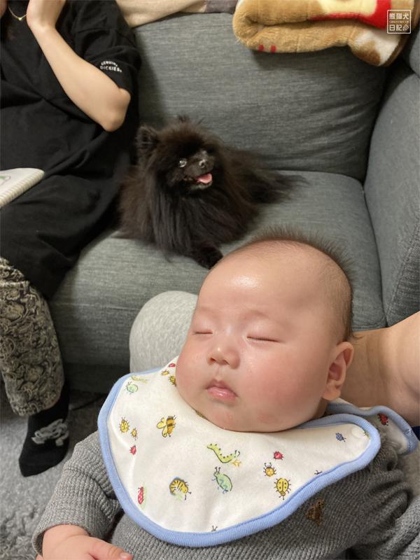 黒ポメラニアンと赤ん坊