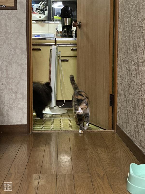 キッチン前の猫と犬
