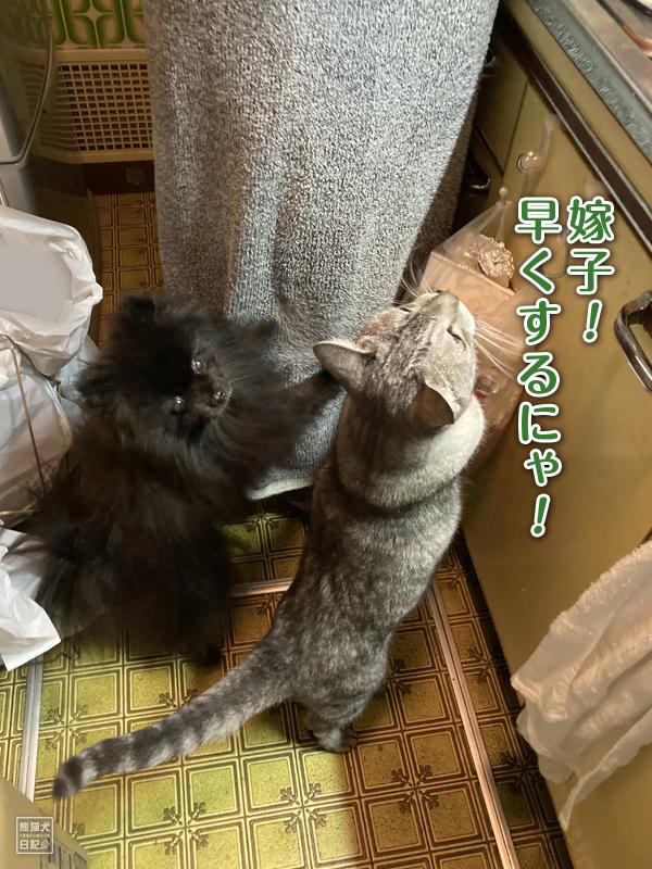 黒ポメラニアンと猫の仲良しペア