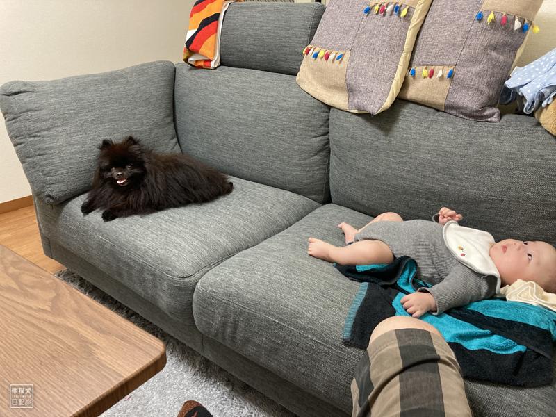 赤ん坊と黒ポメラニアン真熊