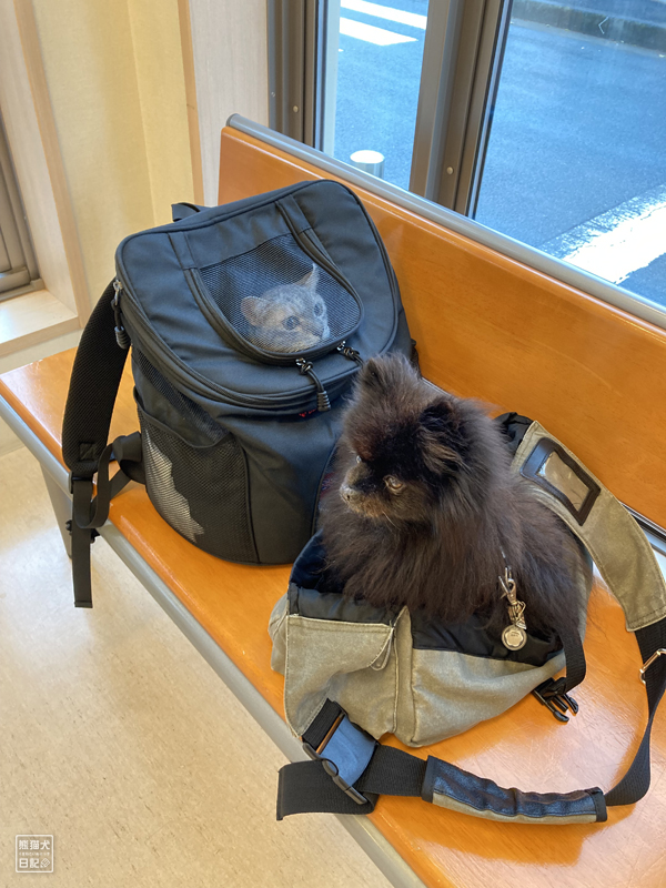 猫と黒ポメラニアン