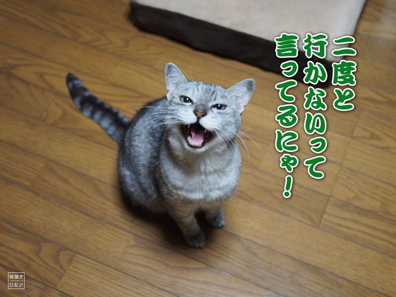癌に侵された猫