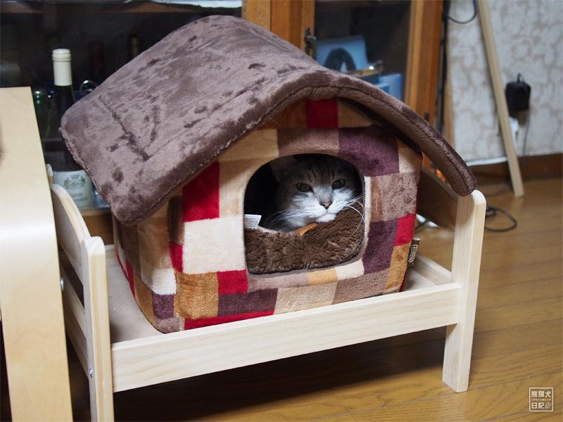 かまくらハウスと猫