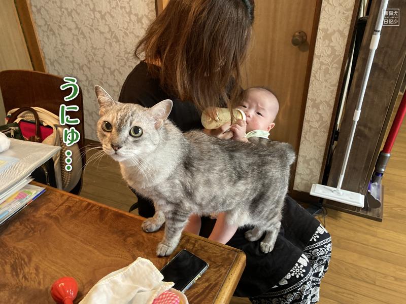 赤ちゃんと猫の攻防