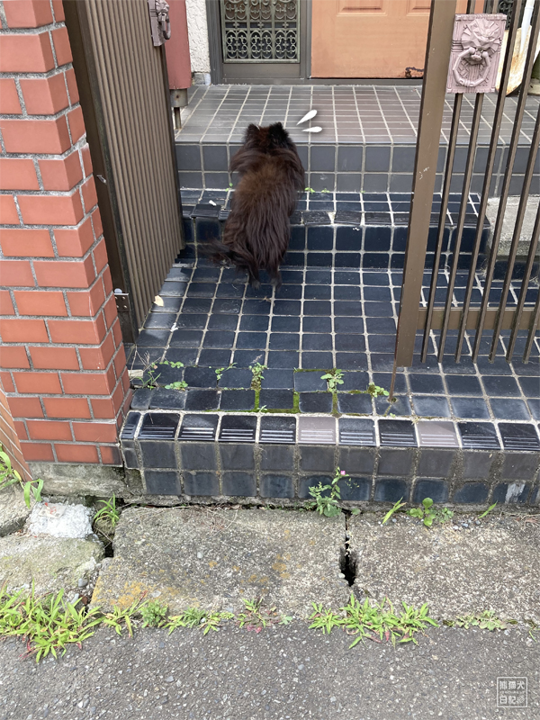 黒ポメラニアン真熊