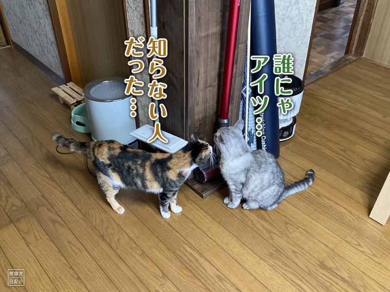 三毛猫の稚葉と天然猫の寿喜