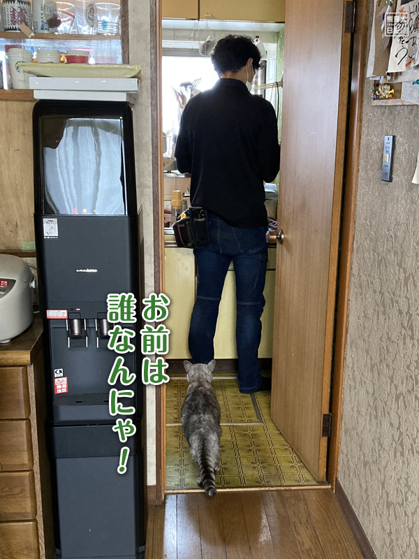 天然猫の寿喜