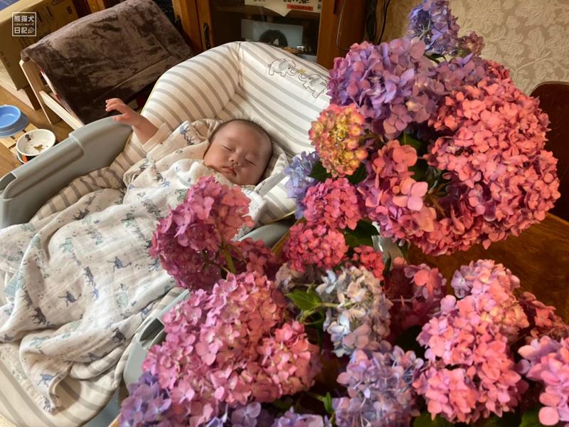 紫陽花と赤ちゃん
