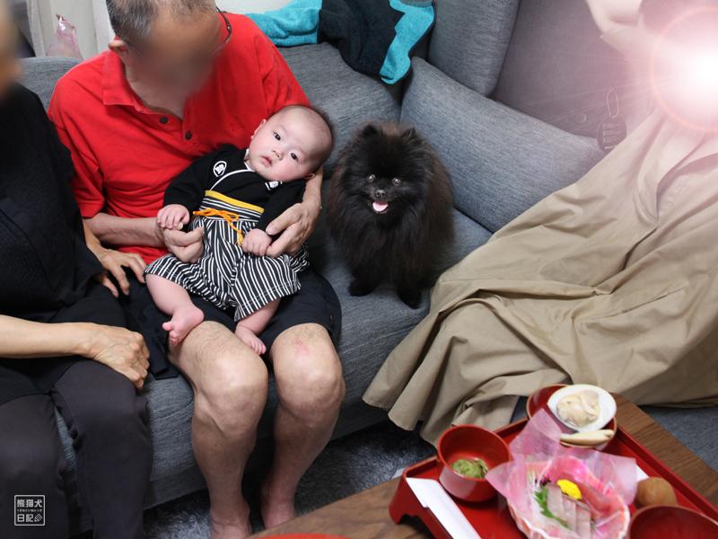お食い初めの赤ちゃんとポメラニアン