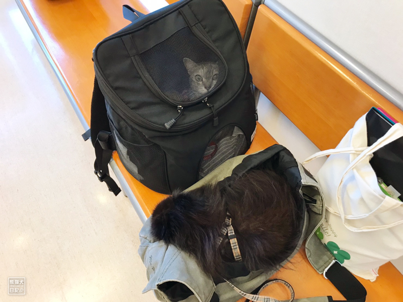 天然猫とポメラニアン