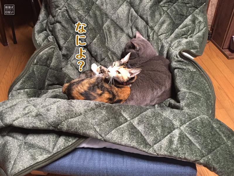 ツンデレ三毛猫と石像猫