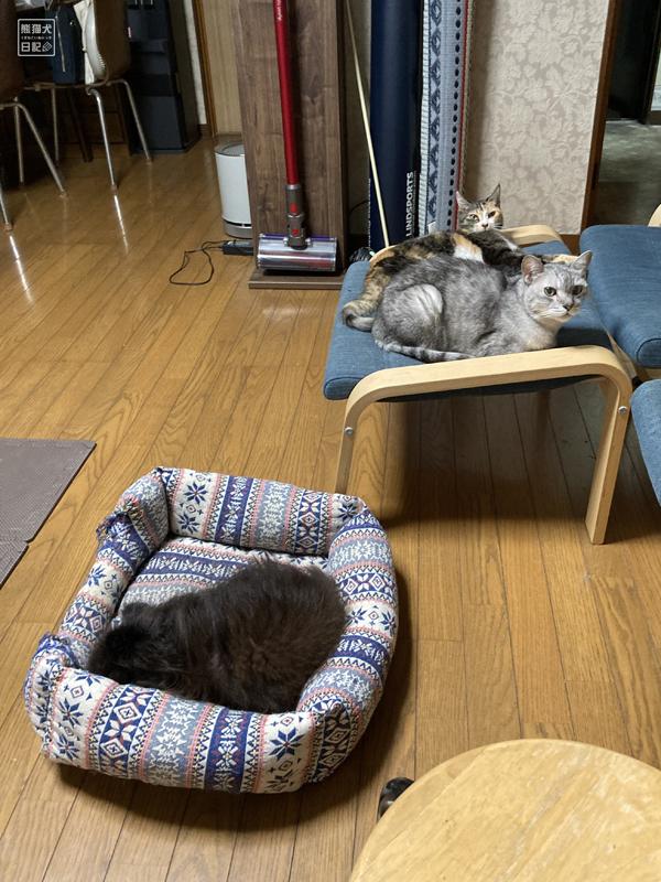 ポメラニアンと猫たち