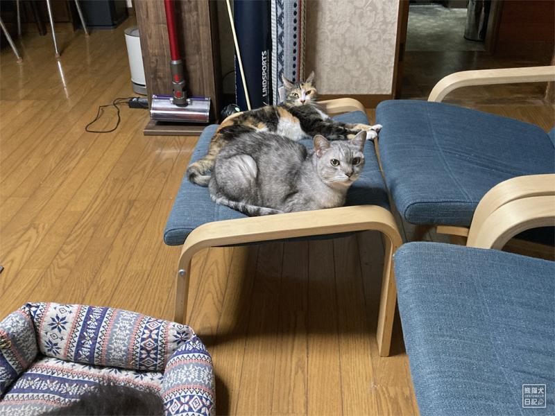 三毛猫と天然猫
